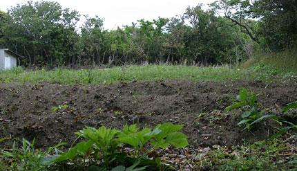 かふいふ土ははだしがちゃうどいゝのです